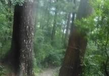 那智の滝、和歌山