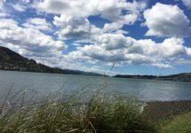 ニュージーランド旅行、ダニーデン、オタゴ半島、ドライブ
