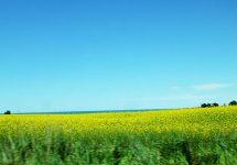 ニュージーランド、ドライブ、美しい景色