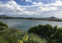 ニュージーランド旅行、オアマル、カリタネ