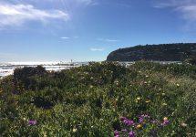 ニュージーランド旅行、クライストチャーチ、サムナー,ビーチ